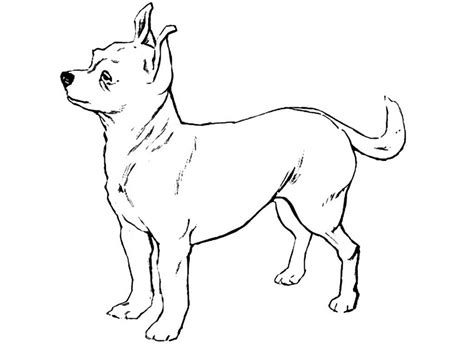 chiwawa puppies coloring pages chihuahua dog coloring pages download and print for free