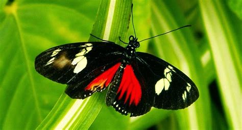 imagenes de mariposas blancas y negras banco de imagenes y fotos gratis imagenes de mariposas