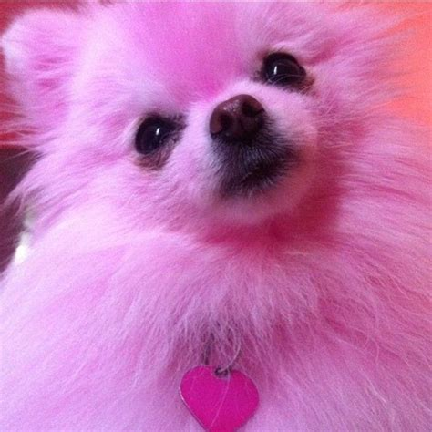 Stelan Pink Puppy 1 8 best pink puppies images on cats colored glass and colors