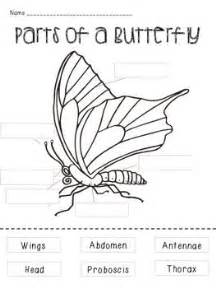 Students match the part of a butterfly with its definition check