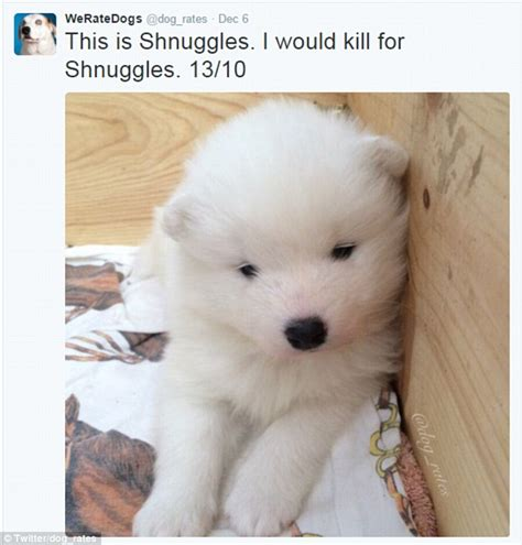 dogs rate weratedogs account rates adorable puppy pictures out of 10 daily mail