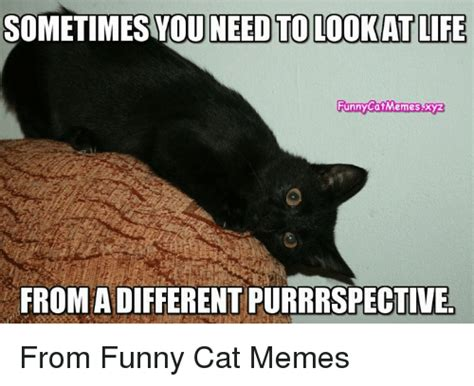 Different Memes - 25 best memes about funny cats meme funny cats memes