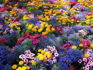 colourful garden bright flowers nature hd wallpaper 160979