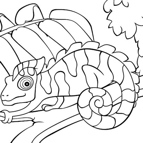 Chameleon Free Colouring Pages Chameleon Coloring Pages Printable