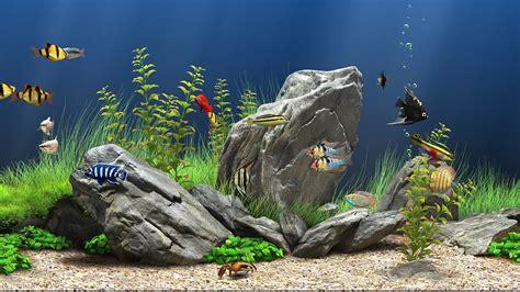 dream aquarium  screensaver  windows hd youtube
