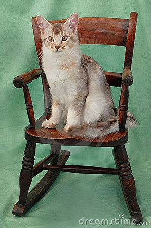 Cat On The Chair by Cat On Rocking Chair Stock Images Image 8640634