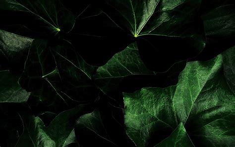 wallpaper black leaf dark green leaves background wallpapers for your desktop