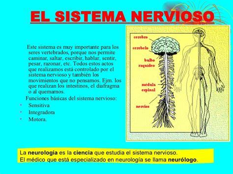 el sistema caged y sistema nervioso