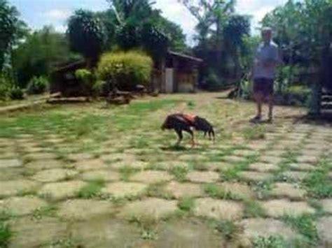 Watch Shamo 2007 Chu Shamo Lemos Brazil Youtube