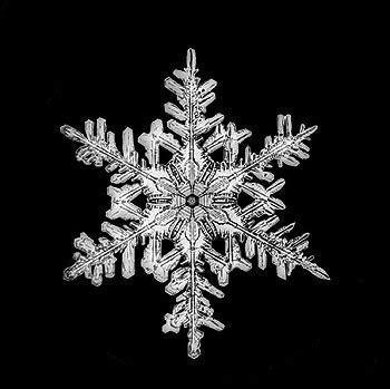 snowflake bentley prints vermont snowflakes quot snowflake quot bentley collection prints