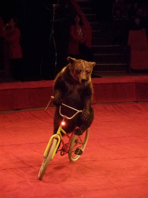bear on a bike masha in the motherland