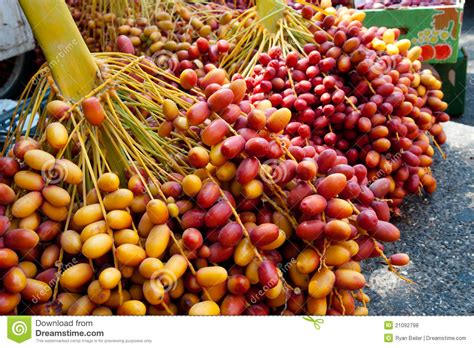 a date fresh dates at jericho market stock photo image 21092798