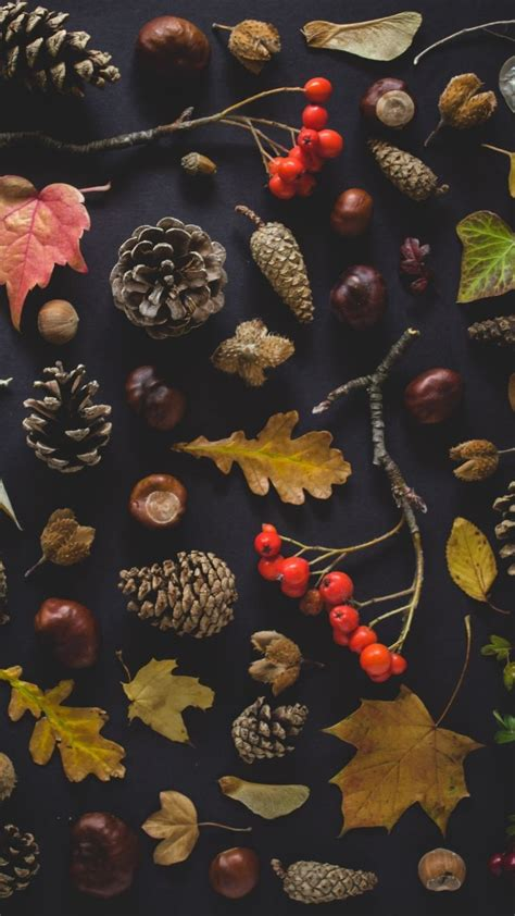 iphone wallpapers  fall  love  autumn preppy