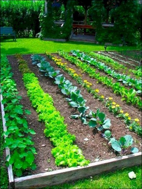 majestic  easy vegetable garden layout ideas