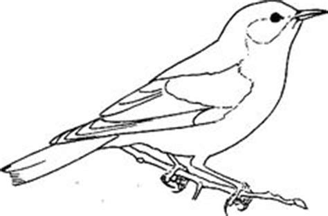 eastern bluebird coloring page homeschooling science nature study on pinterest 110 pins