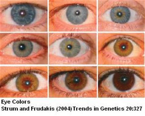 all possible eye colors sandwalk the genetics of eye color