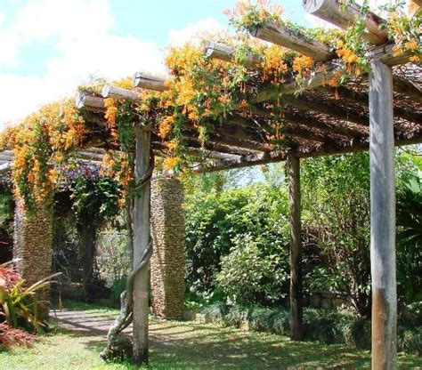 vine covered pergola at fairchild gardens public gardens on pinterest pinterest gardens