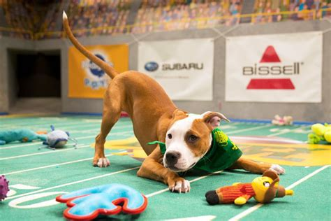 the puppy bowl the puppy bowl explained vox