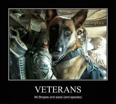 veteran dogs happy veterans day to all who served and servicedogs service