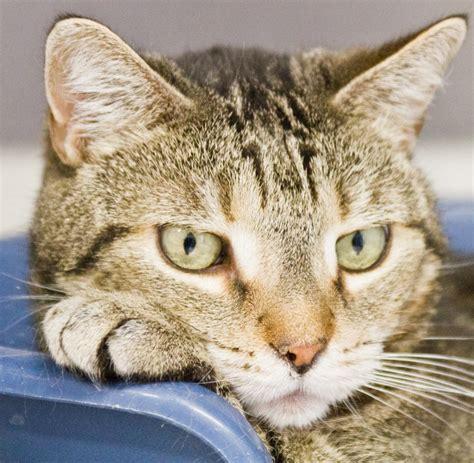 katze alleine halten wohnung katzen beschftigen kartonburg with katzen