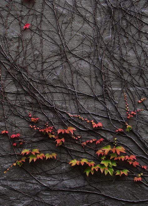 oscura fotografia fotograf 237 a oscura y taringa