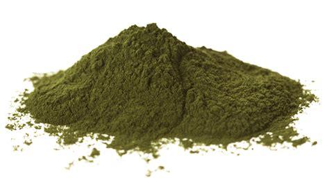 Seaweed Powder wholesale kelp powder for trade orders supernutrients