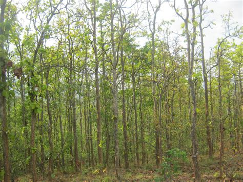 of tree file sal tree np jpg