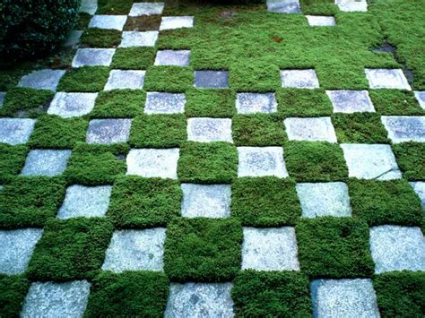 Sun Loan Sweepstakes - replace your lawn with these groundcovers hgtv