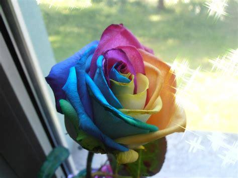 imagenes de rosas injertadas 191 c 243 mo tener tus propias rosas arcoiris