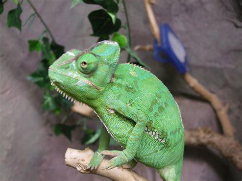 Lu Reptil reptile tanks waterfall reptile tanks for sale