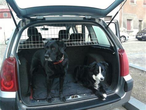 si鑒e auto pour chien le code de la route le transport des chiens en voiture