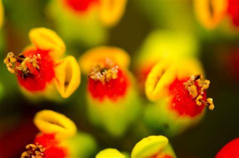 Definici 243 N De Reino Vegetal Qu 233 Es Y Concepto Que Es Color Vegetal L