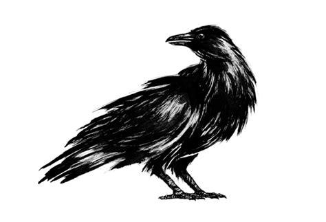 form design crows nest branding crows nest by eskimo ams design blog