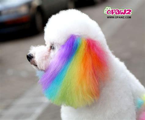 rainbow puppy rainbow chalk grooming somewhere the rainbow