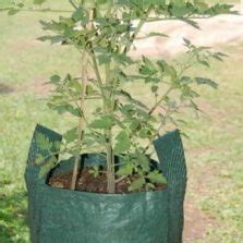 Planterbag 11 Liter Hijau No Handle planter bag hijau 35 liter bibitbunga