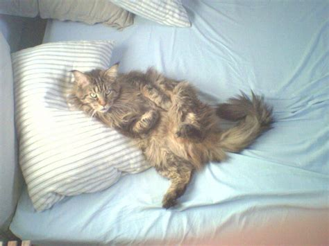 keep cat off bed my cat on my bed by cleo8 on deviantart