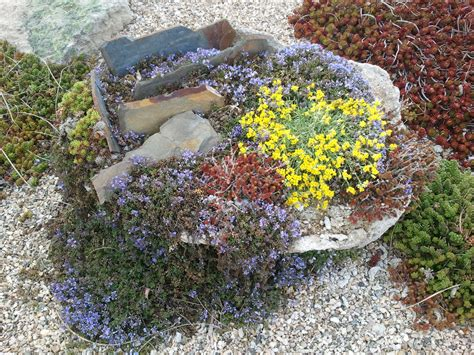 What Is Rock Garden Rock Gardens An Introduction Awkward Botany
