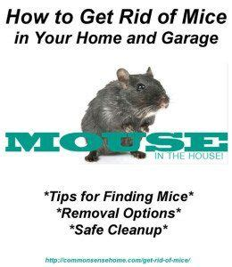 how to get rid of mice in basement how to get rid of mice in your home and garage