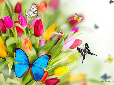 Wallpaper Flowerbutterfly Code No001 Hd Wide Nature Wallpapers Images I Beautiful Nature