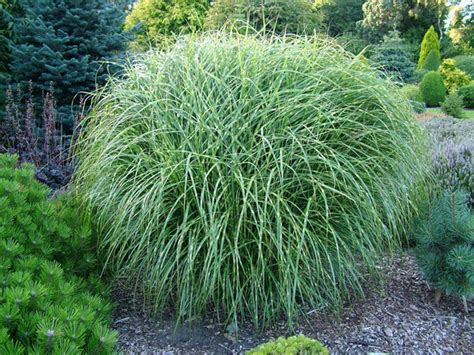 Landscape Grasses Beautify Your Garden With Beautiful Ornamental Grasses