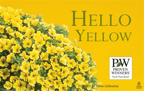 Hello Yellow by Hello Yellow Colorwise 174 11x7 Quot Display Benchcard Proven