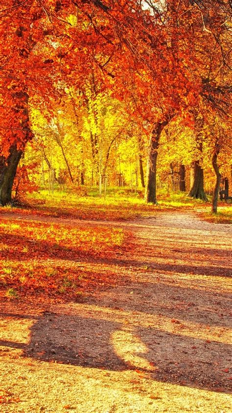 wallpaper autumn park red leaves wood bench sunlight