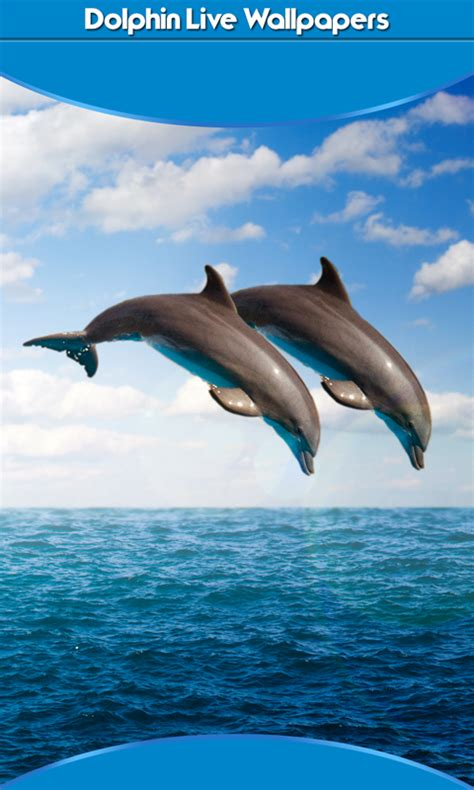 dolphin android dolphin live wallpapers new free android app android freeware