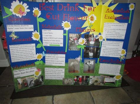 21 Best Science Fair Images On Pinterest Science Science Fair Display Board Ideas