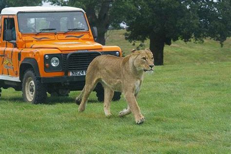 discount vouchers woburn safari park woburn safari park cambridge tour