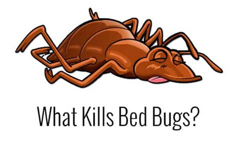 what kills bed bugs on contact what kills bed bugs