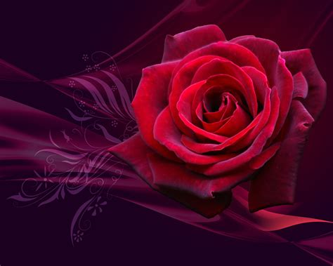 laptop wallpaper rose lap top valley red roses wallpapers