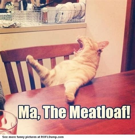 Funny Hungry Meme - ma i iz hungry meme funny lol cat amusement