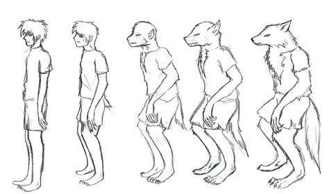 step 10 how to draw a werewolf transformation werewolf 1000 images about wolf wolf things on pinterest wolves