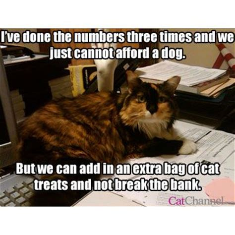 Fancy Dog Meme - 11 best ideas about cat memes on pinterest cats hunters